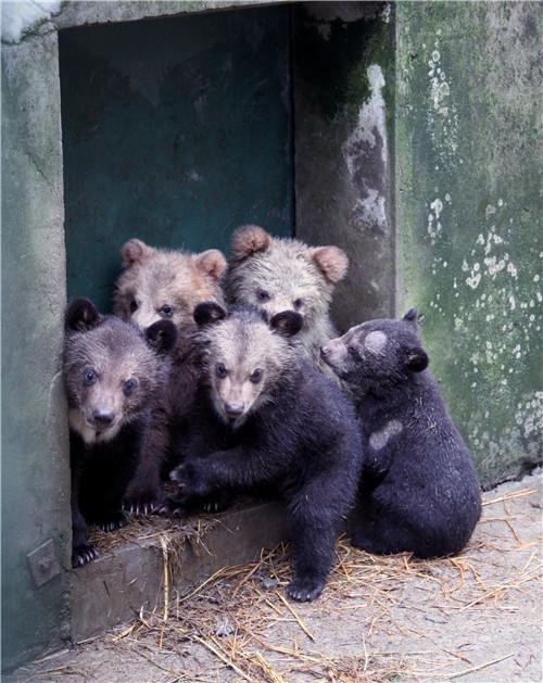 """动物园的动物们又到了""""开枝散叶""""的季节."""